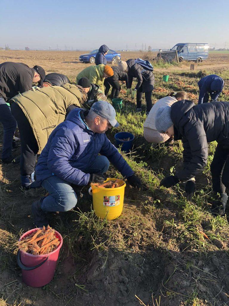 В Гомельском районе прошла областная профсоюзная акция «Соберем урожай ВМЕСТЕ»