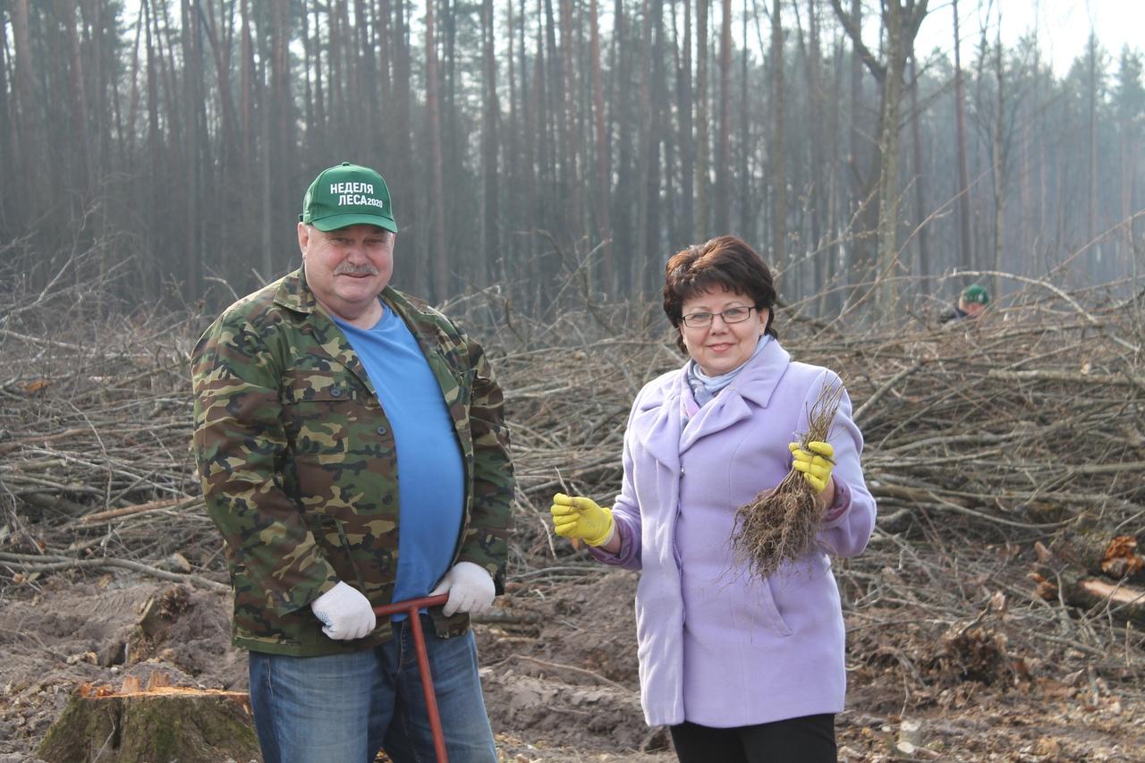 Профсоюзы области посадили более 7,5 тыс. деревьев